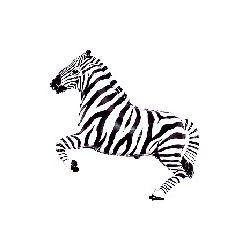 Balón Zebra čierna